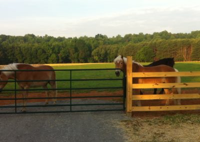 horse-fence-gate