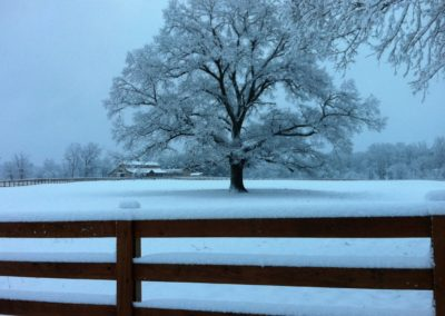 equestrian-fence-winter