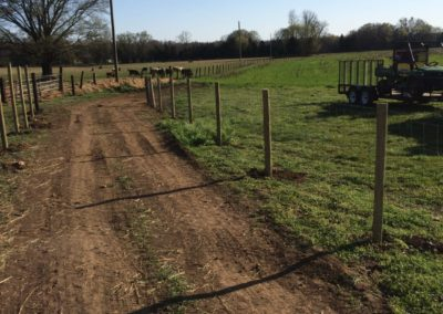 agricultural-fence in pasture